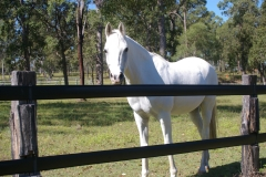 Horse Fence - Boundaries