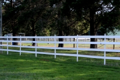Four Rail White Horse Fence