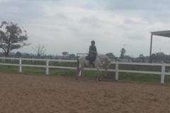 Horse Fence Arena - 2 rail white 640 480