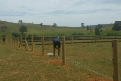 Easy Horse Fence Installation - string line