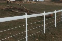 Horse Gallary Star Picket Sleeves 3