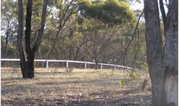 Horse Sight Rail - White