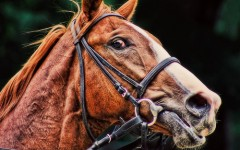 Horse Behaviour Blog - Startled Horse