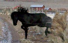 minimising horse injuries