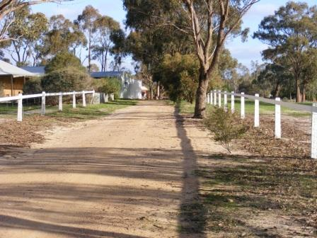 Transform you horse property after shot