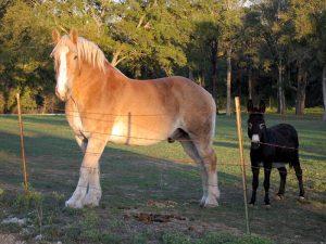 minimising horse inuries