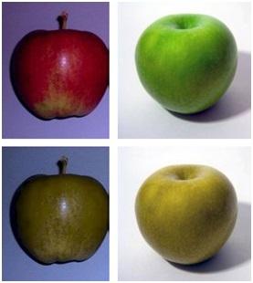 Blog 8 - Horse Sight apples