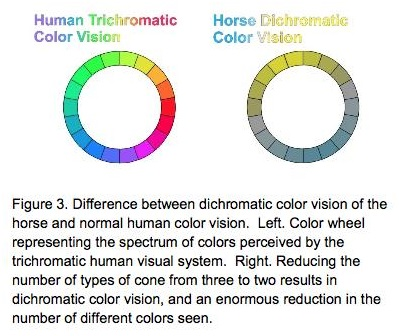 Blog 8 - Horse sight colour wheels