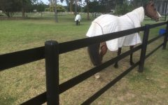 Horse Fence Requirements  height