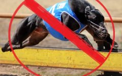 Horse Racing Will SUrvice