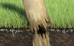 protect timber fence posts